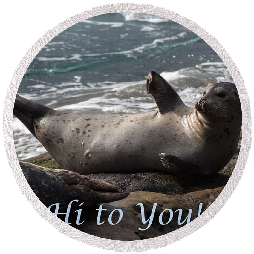 Sea Lion Round Beach Towel featuring the photograph Hello To You Sea Lion by Darleen Stry