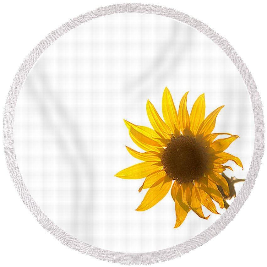 California Round Beach Towel featuring the photograph Hello Yellow by Peter Tellone