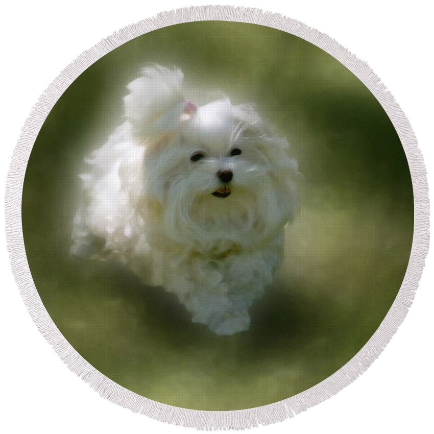 Dogs Round Beach Towel featuring the photograph Here She Comes by Lois Bryan