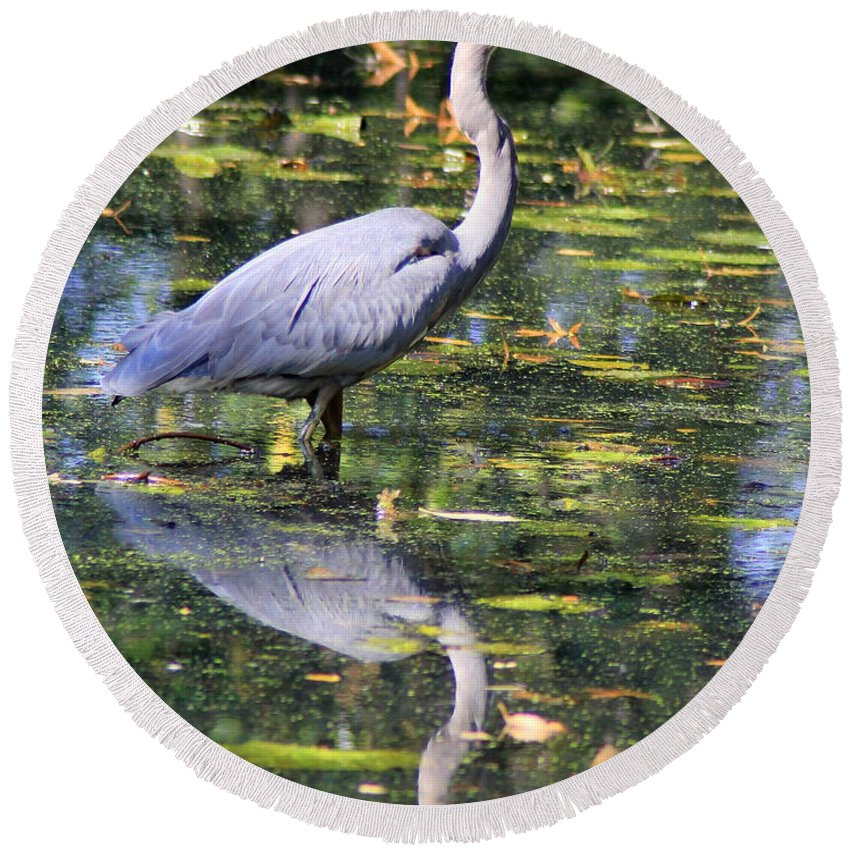 Blue Round Beach Towel featuring the photograph Heron Hunter by Kenny Glotfelty