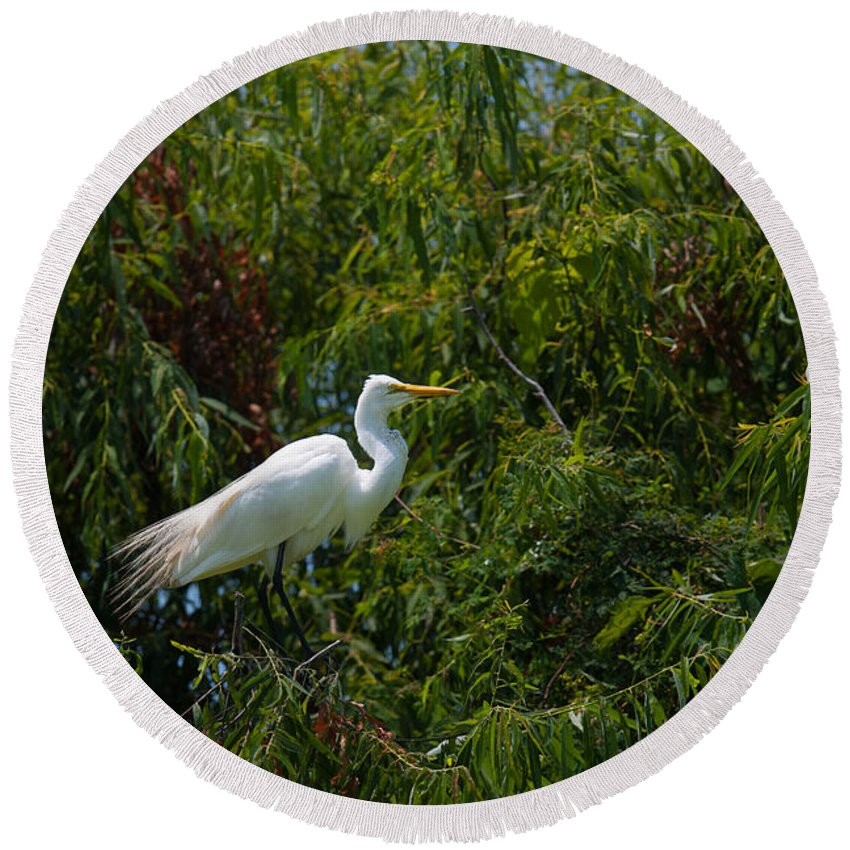 Egret Round Beach Towel featuring the photograph Heron In Tree by Dale Powell