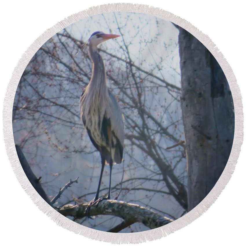Heron Round Beach Towel featuring the photograph Heron Looking Out by MTBobbins Photography