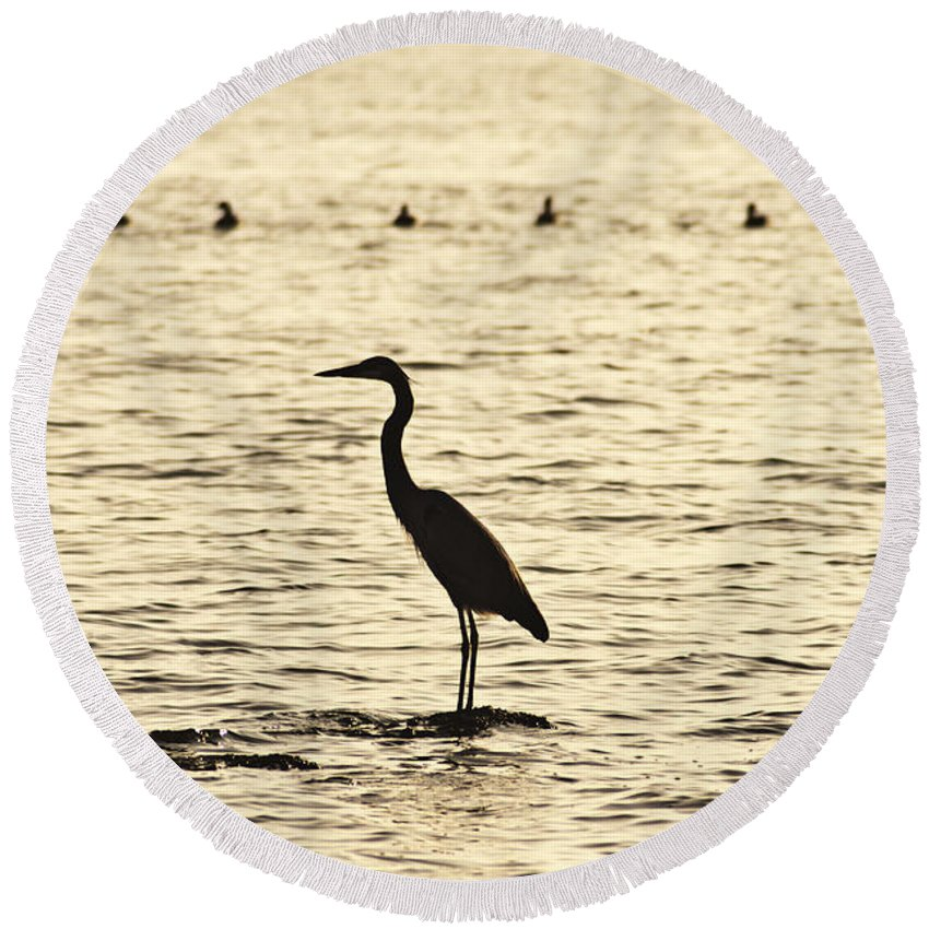 Heron Standing In Water Round Beach Towel featuring the photograph Heron Standing In Water by Bill Cannon