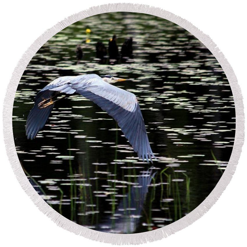Heron Round Beach Towel featuring the photograph Heron Take Off by Kenny Glotfelty