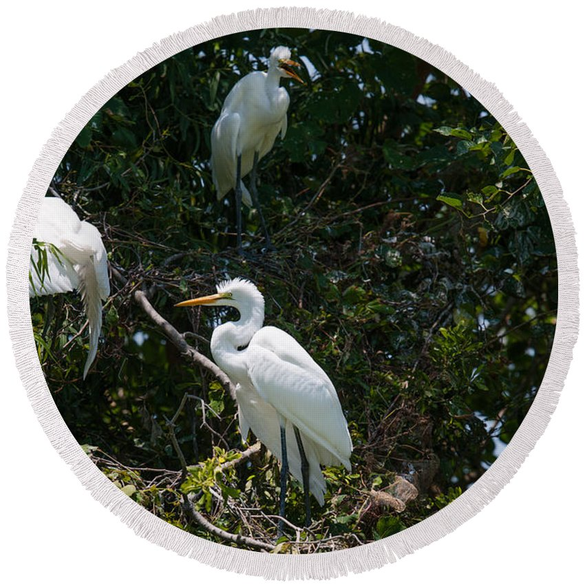 Egret Round Beach Towel featuring the photograph Heron Trio by Dale Powell
