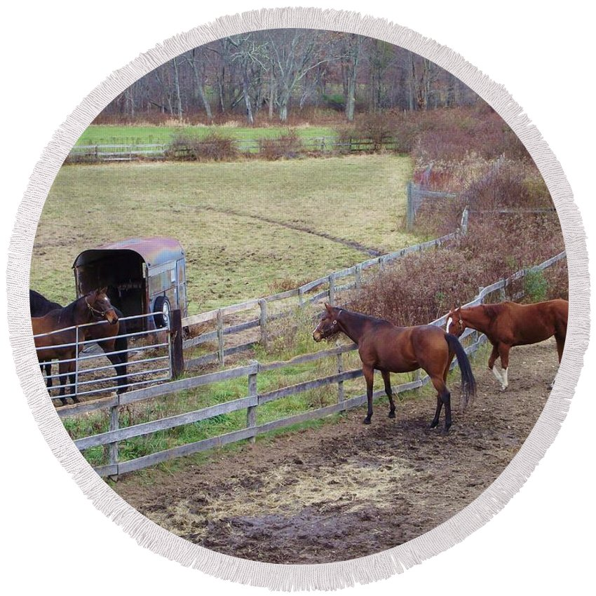 Horses Round Beach Towel featuring the photograph Hey Neighbor by Michelle Welles