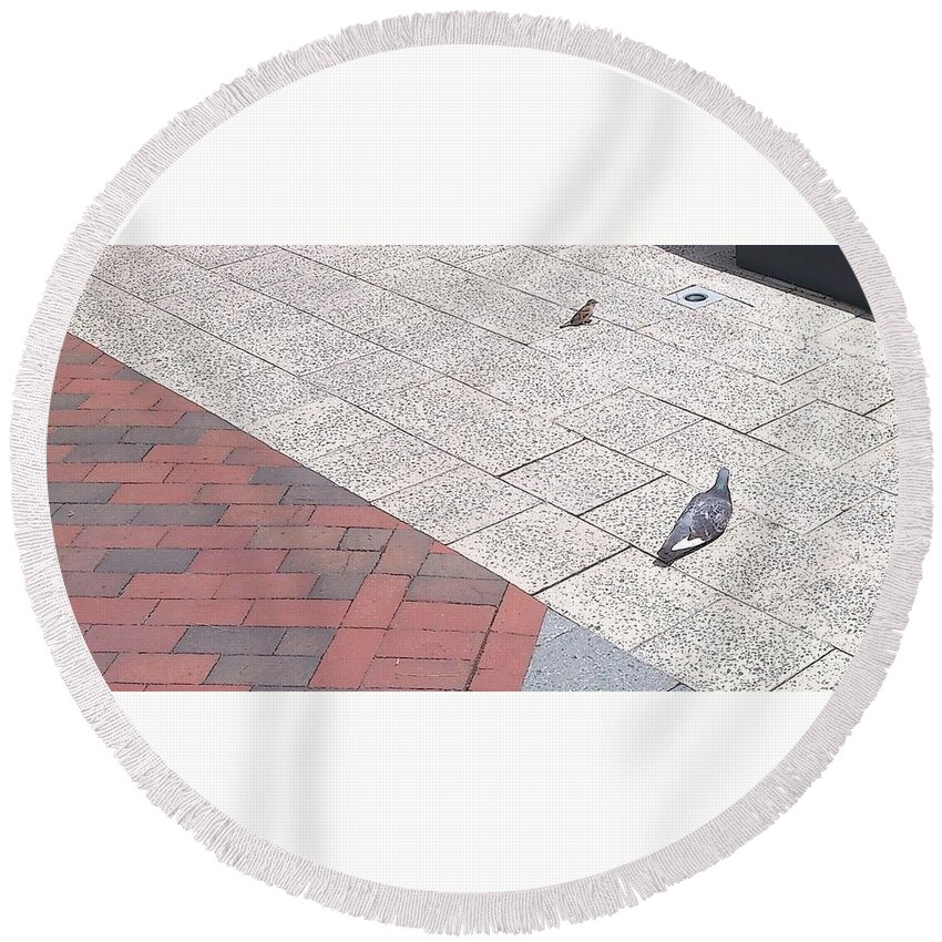 Bird Round Beach Towel featuring the photograph Hey You This Is My Spot by Chris W Photography AKA Christian Wilson