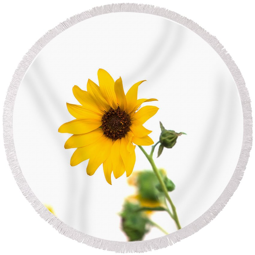 California Round Beach Towel featuring the photograph Hi Key Sunflower by Peter Tellone