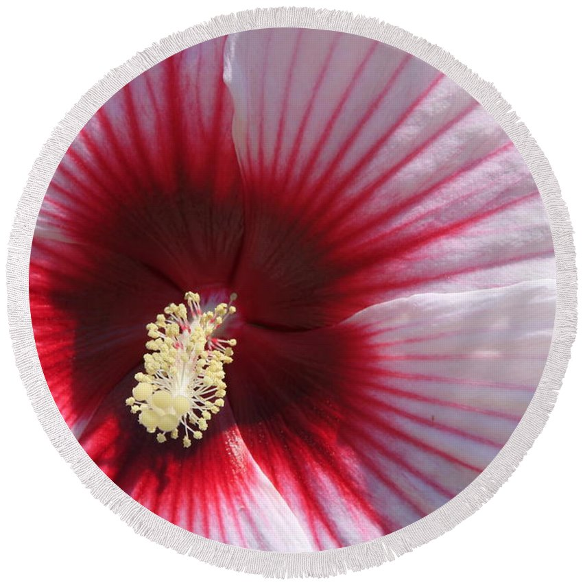 Hibiscus Round Beach Towel featuring the photograph Hibiscus-callaway Gardens by Mountains to the Sea Photo