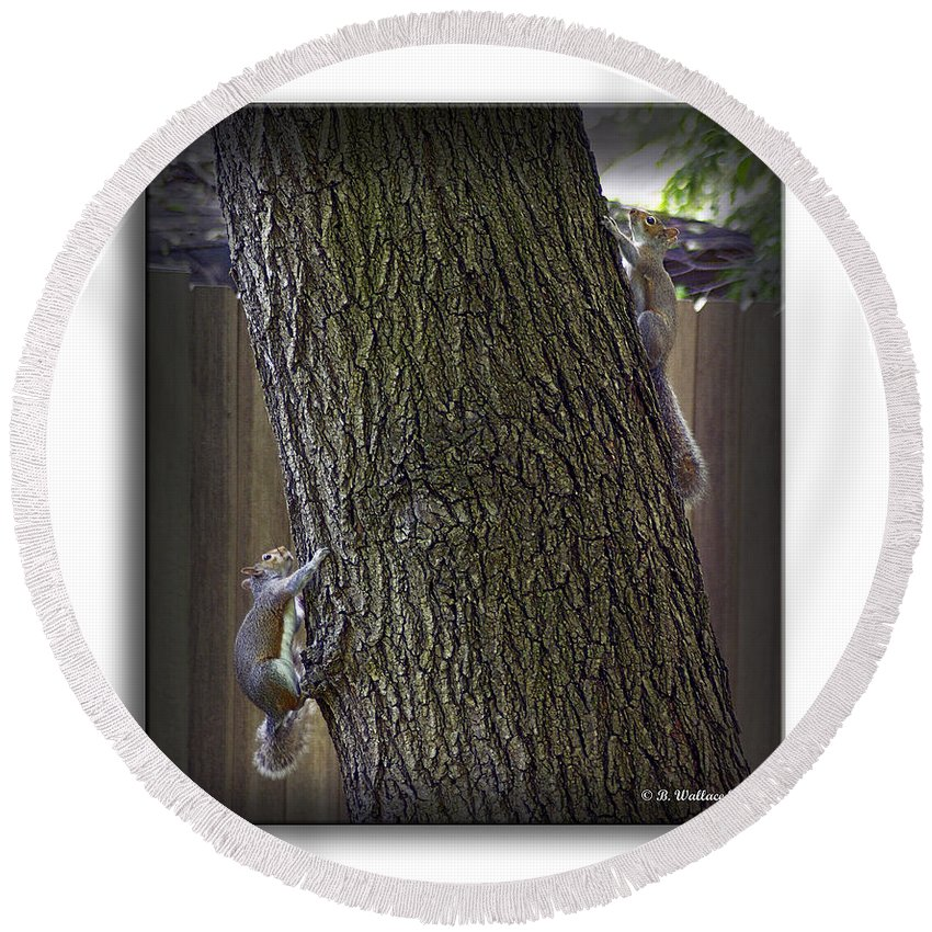 2d Round Beach Towel featuring the photograph Hide And Seek Squirrels by Brian Wallace