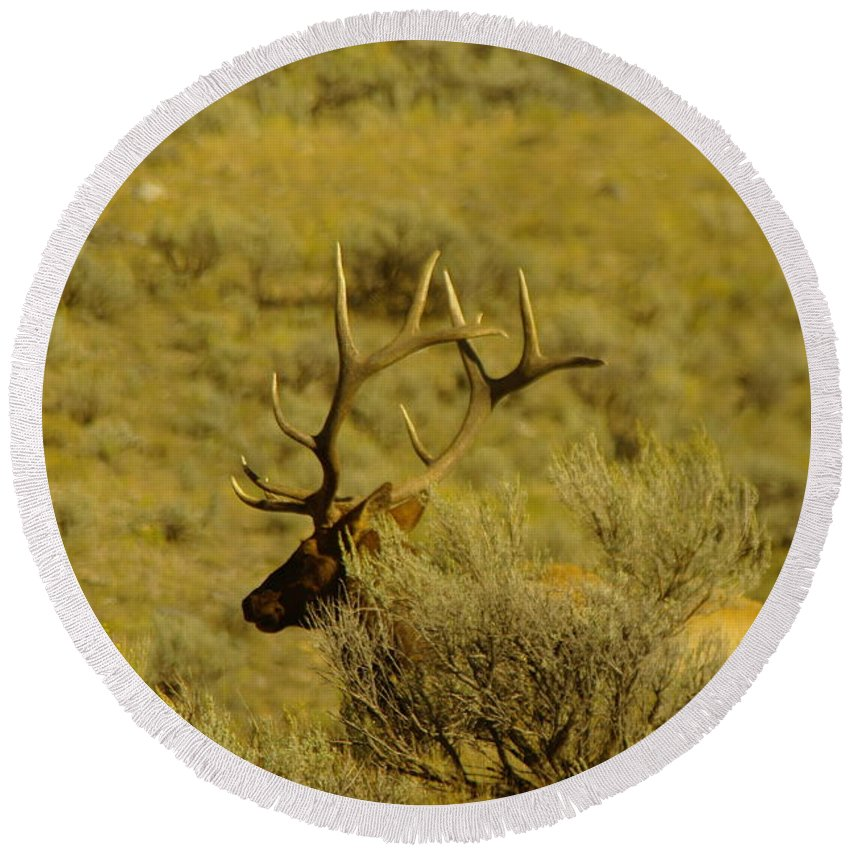 Elk Round Beach Towel featuring the photograph Hiding Behind A Bush by Jeff Swan