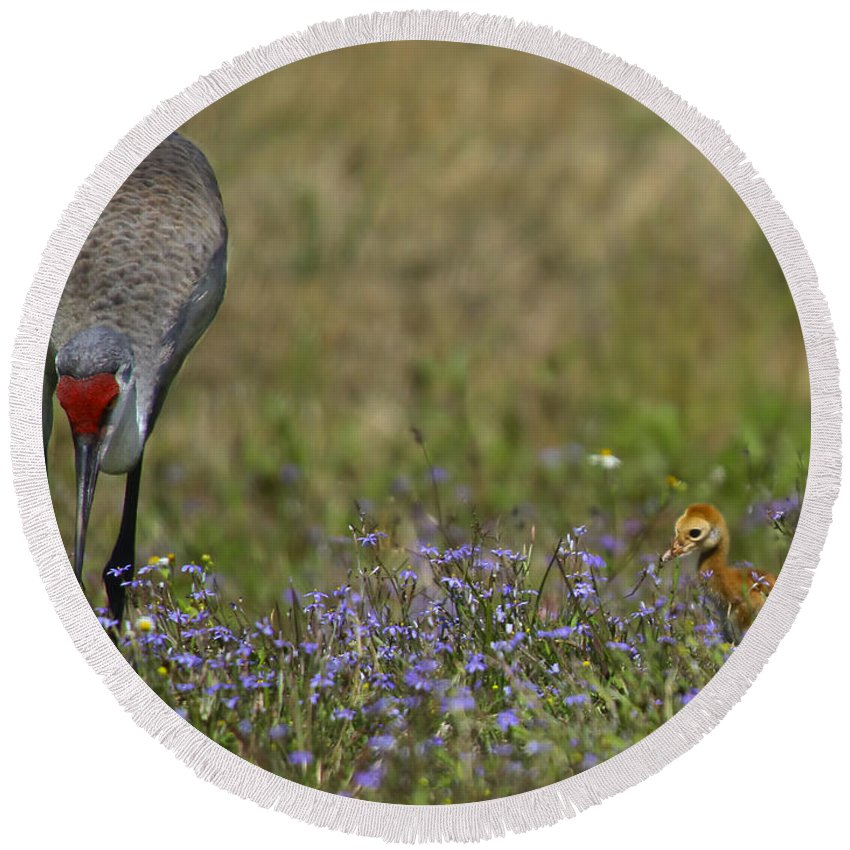 Sandhill Crane Round Beach Towel featuring the photograph Hiding In The Flowers by Barbara Bowen