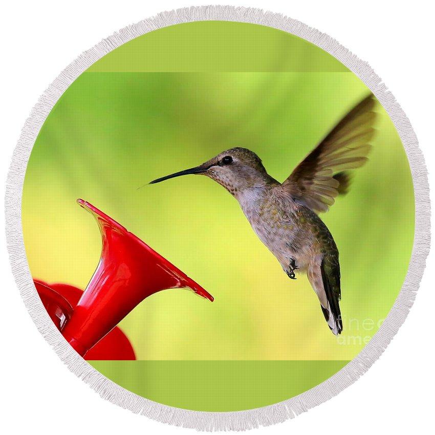 Hummingbird Round Beach Towel featuring the photograph High Flying Hummingbird by Carol Groenen