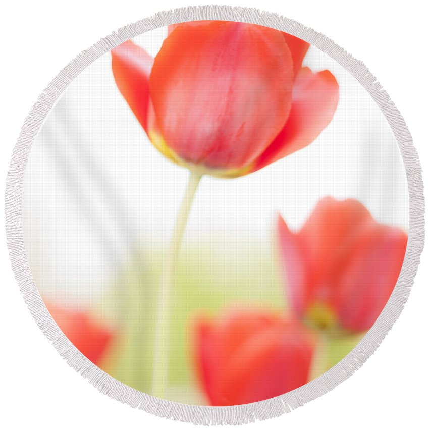 3scape Round Beach Towel featuring the photograph High Key Tulips by Adam Romanowicz