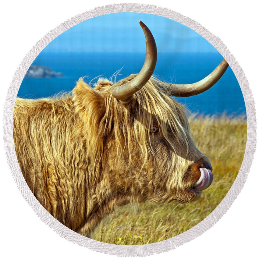 Highland Cattle Round Beach Towel featuring the photograph Highland Beauty by Bel Menpes