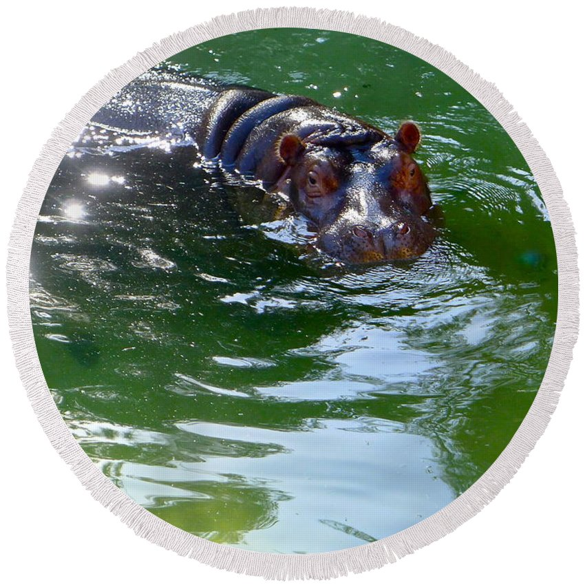 Hippopotamus Round Beach Towel featuring the photograph Hippo Bling by Denise Mazzocco