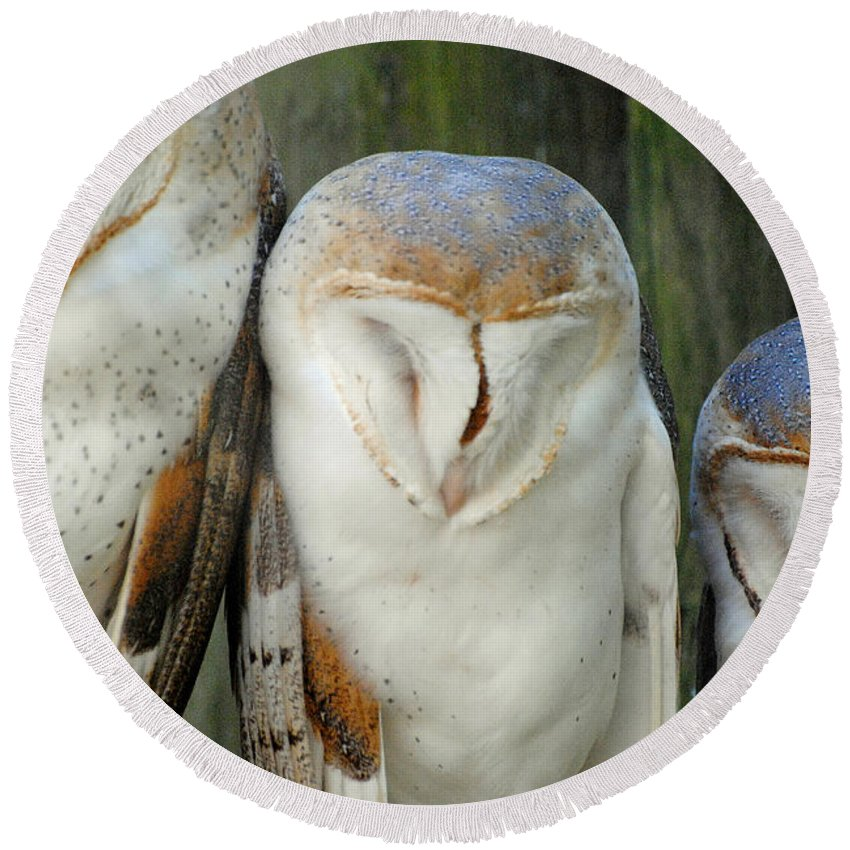 Homosassa Springs State Park Round Beach Towel featuring the photograph Homosassa Springs Snowy Owls 1 by Jeff Brunton