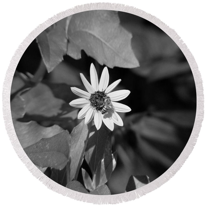 Bee Round Beach Towel featuring the photograph Honeybee by David Weeks