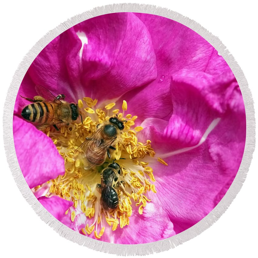 Pink Rose Round Beach Towel featuring the photograph Honeybees On Pink Rose by Sharon Talson
