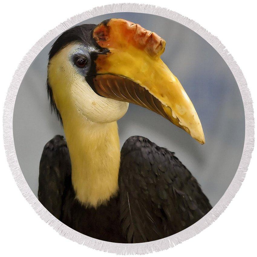 Beak Round Beach Towel featuring the photograph Hornbill 2 by Ingrid Smith-Johnsen