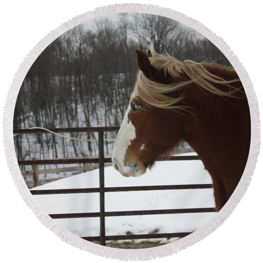 Snow Round Beach Towel featuring the photograph Horse 09 by David Yocum
