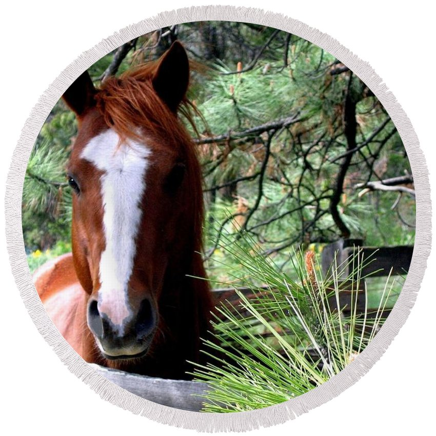 Horse Round Beach Towel featuring the photograph Horse Country by Will Borden