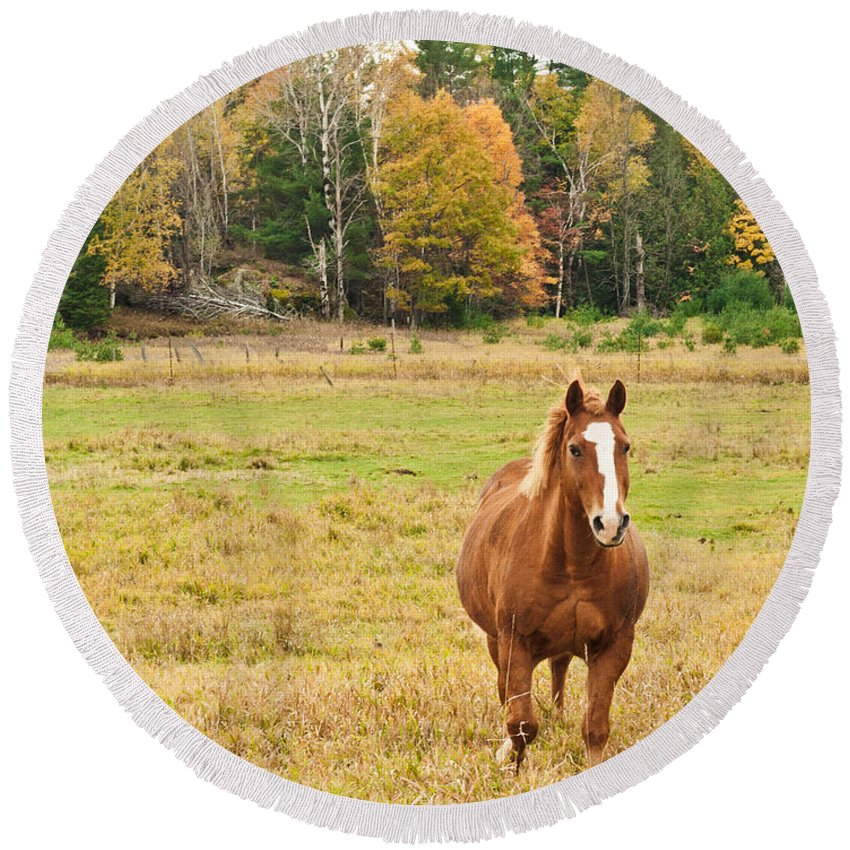 Horses Round Beach Towel featuring the photograph Horse In Field-fall by Cheryl Baxter
