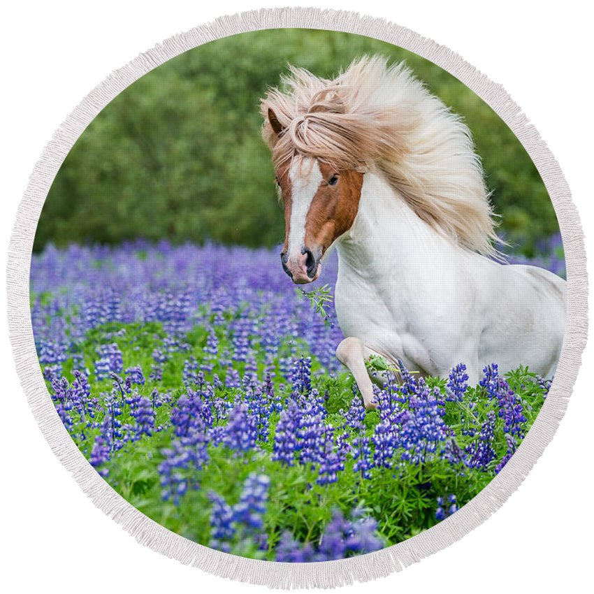 Photography Round Beach Towel featuring the photograph Horse Running By Lupines. Purebred by Panoramic Images