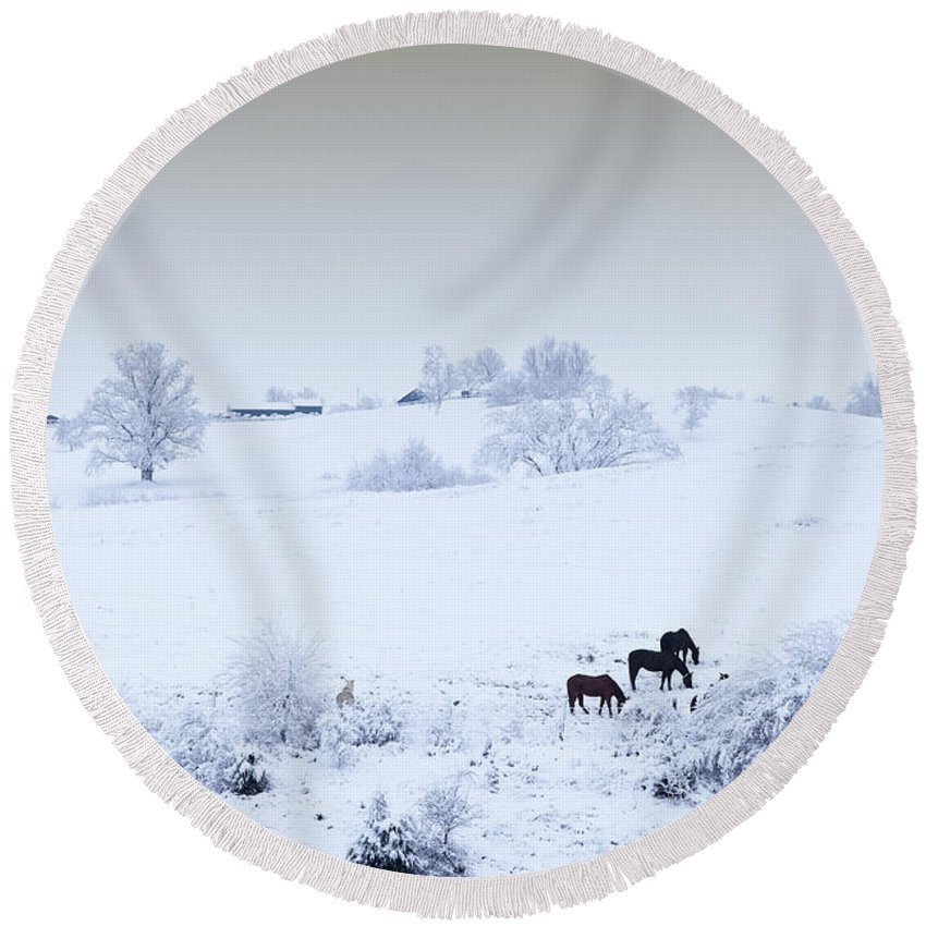 Field Round Beach Towel featuring the photograph Horses In The Snow by Alexey Stiop