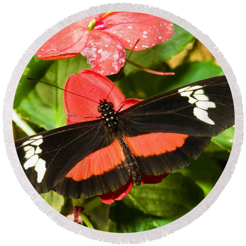 Nature Round Beach Towel featuring the photograph Hortense Butterfly by Millard H. Sharp