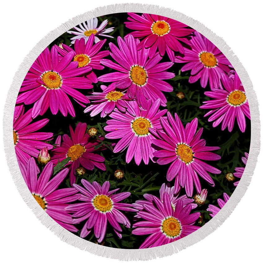 Photography Round Beach Towel featuring the photograph Hot Pink Daisies by Kaye Menner
