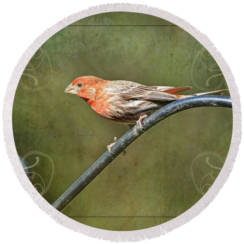 Nature Round Beach Towel featuring the photograph House Finch On Guard II by Debbie Portwood