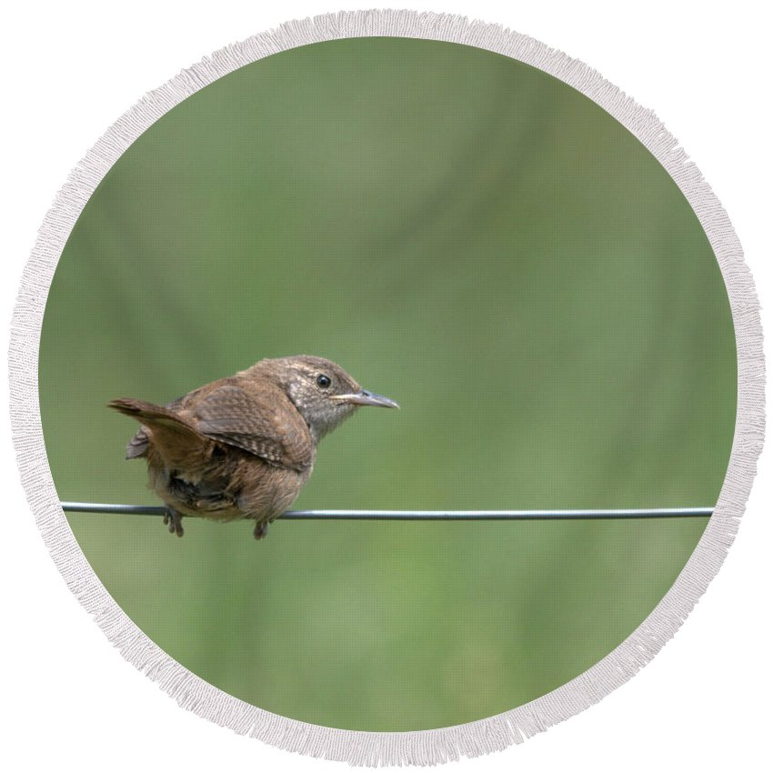 Wren Round Beach Towel featuring the photograph House Wren by Cheryl Baxter