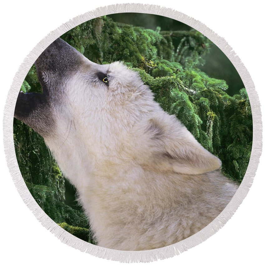 Arctic Wolf Round Beach Towel featuring the photograph Howlling Arctic Wolf Pup Endangered Species Wildlife Rescue by Dave Welling