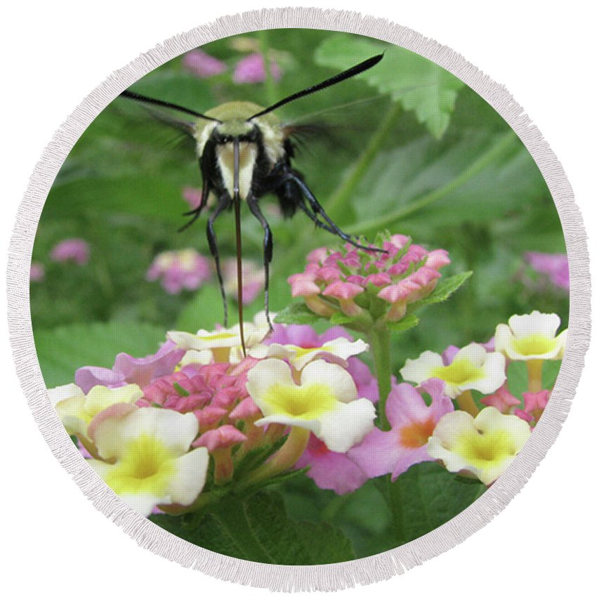 Insect Round Beach Towel featuring the photograph Hummingbird Moth by Donna Brown