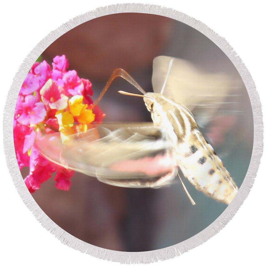 Hummingbird Moth Round Beach Towel featuring the photograph Hummingbird Moth by Kume Bryant