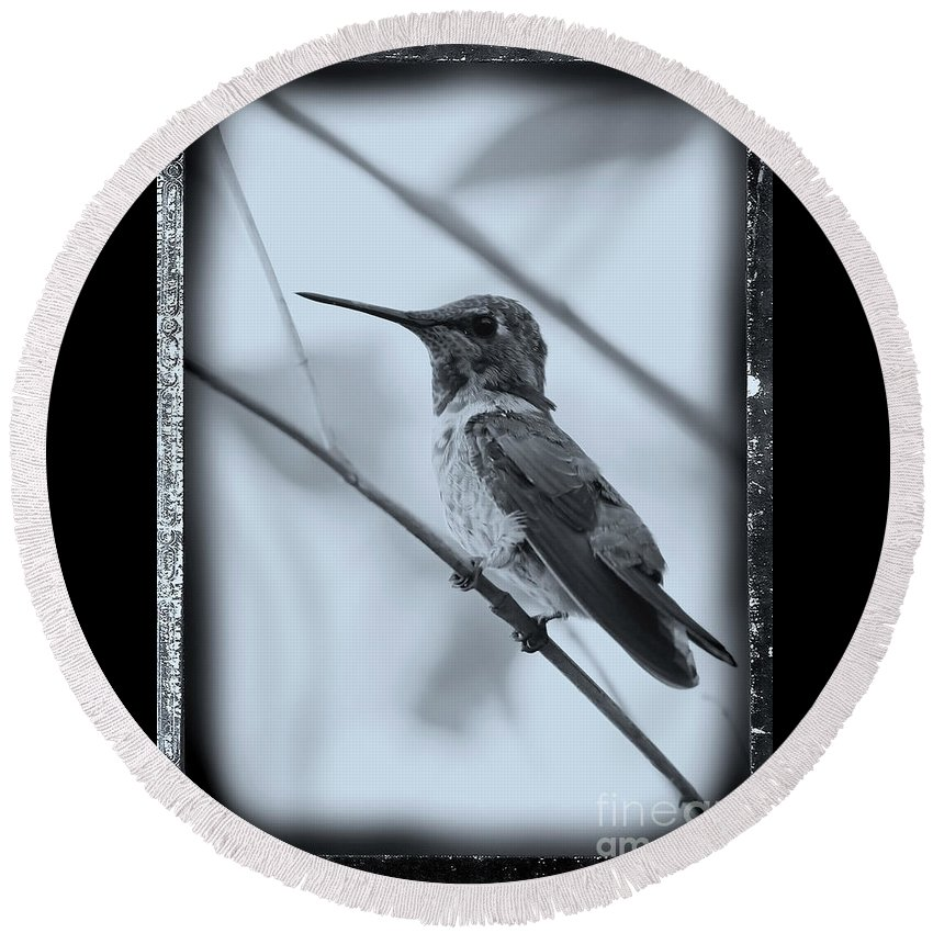 Hummingbird Round Beach Towel featuring the photograph Hummingbird With Old-fashioned Frame 1 by Carol Groenen