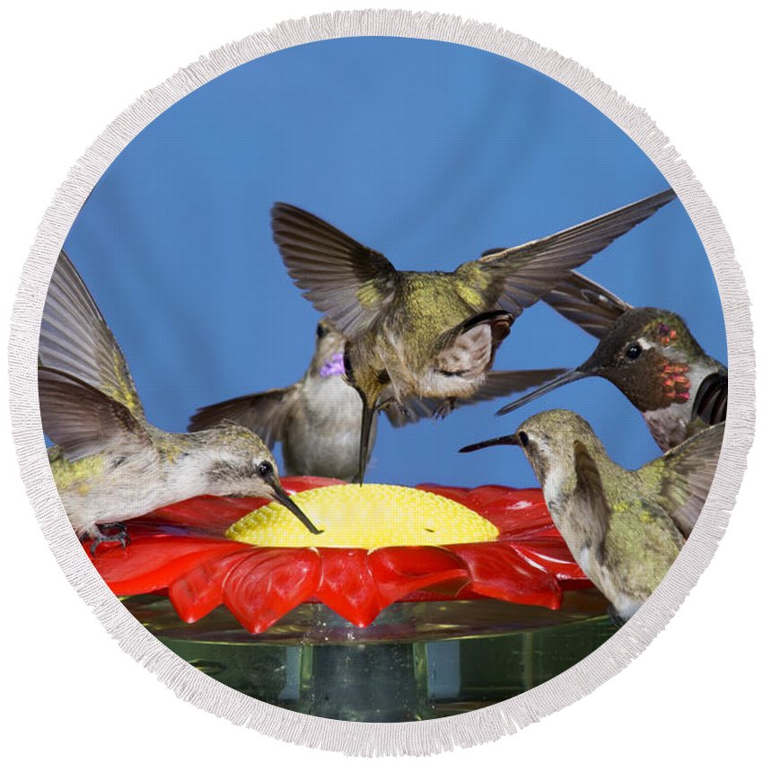 Fauna Round Beach Towel featuring the photograph Hummingbirds At Feeder by Anthony Mercieca
