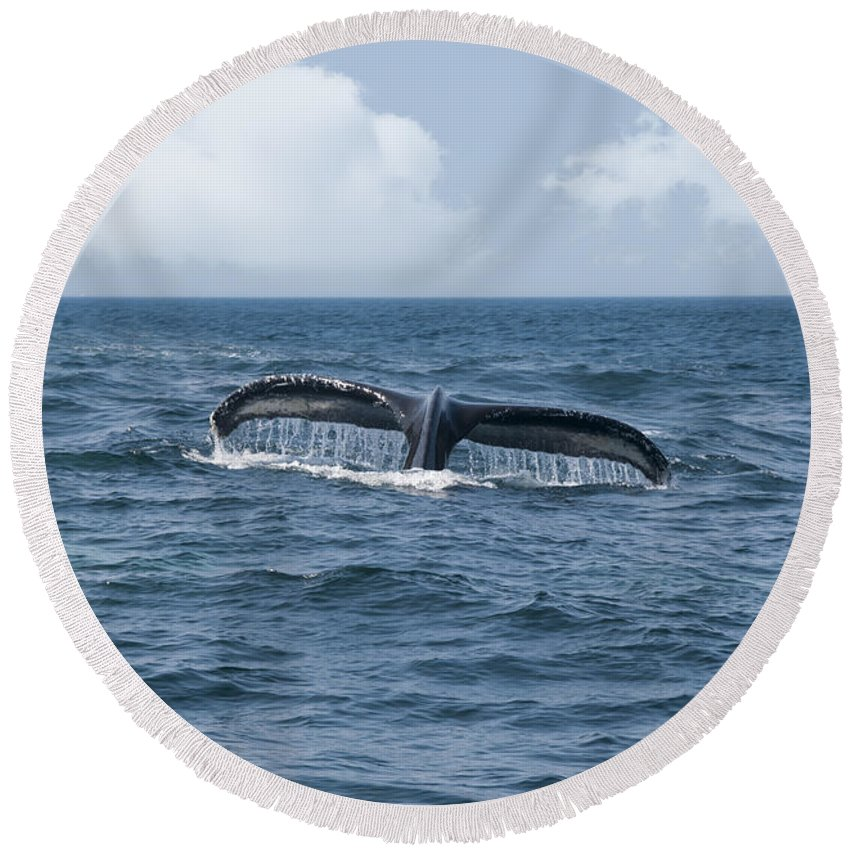 America Round Beach Towel featuring the photograph Humpback Whale Fin by Juli Scalzi