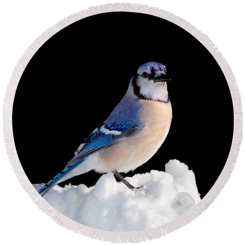 Bird Round Beach Towel featuring the photograph I Am So Done With Winter by John Absher