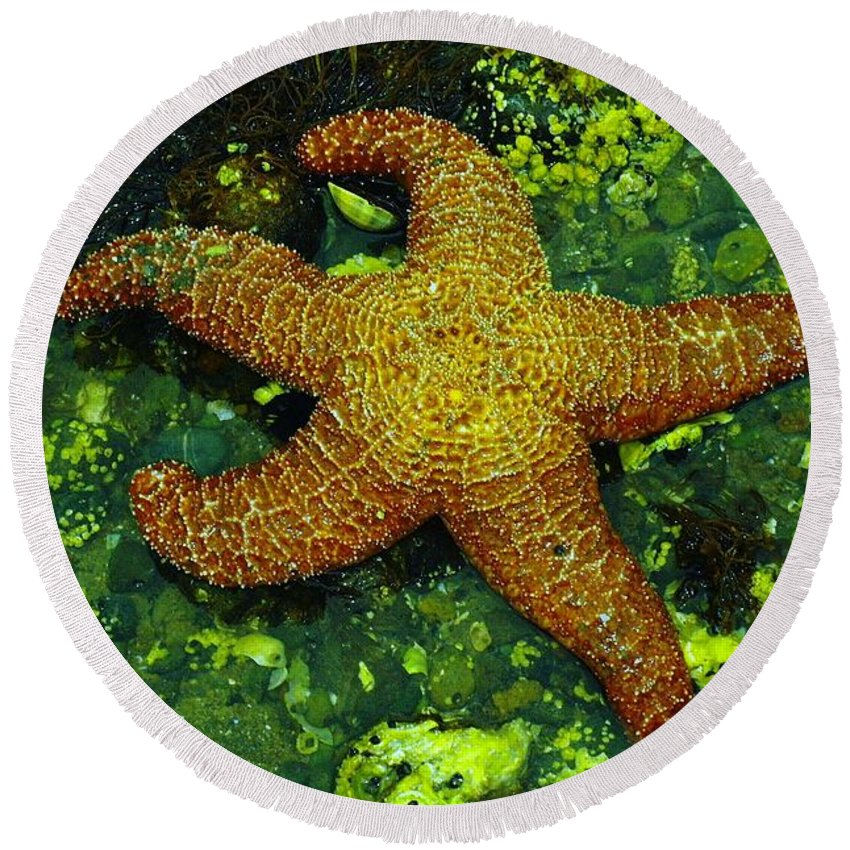 Sea Round Beach Towel featuring the photograph I Found A Starfish by Jeff Swan