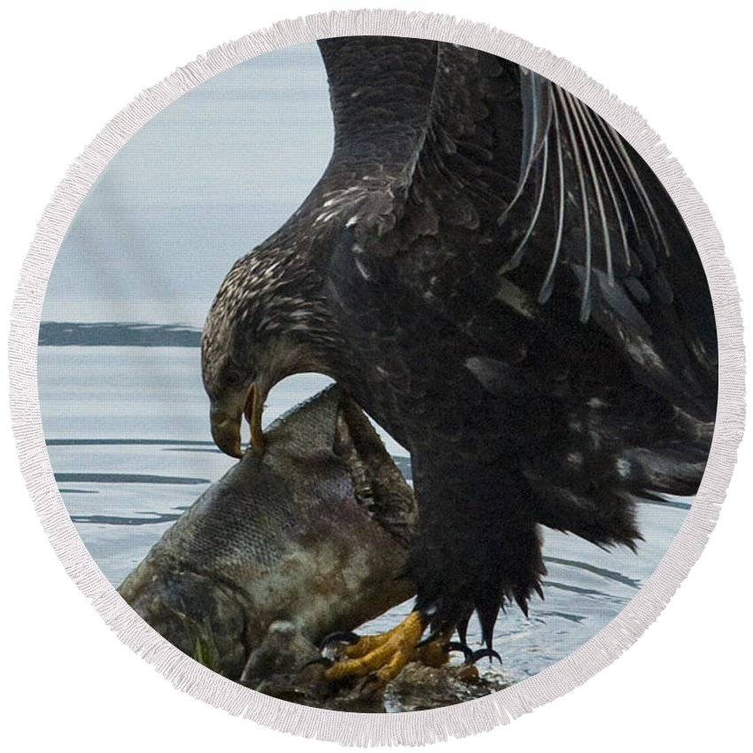 Eagle Round Beach Towel featuring the photograph I Got It.... by Rod Wiens