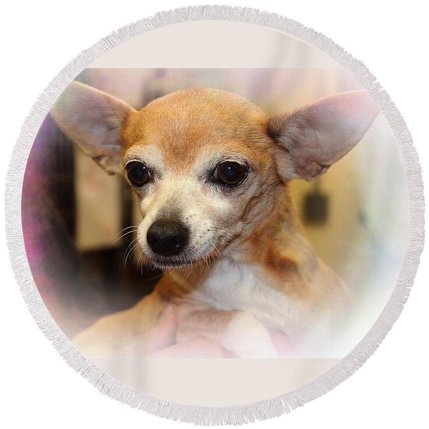 Chihuahua Round Beach Towel featuring the photograph I Hear Everything by Joyce Baldassarre