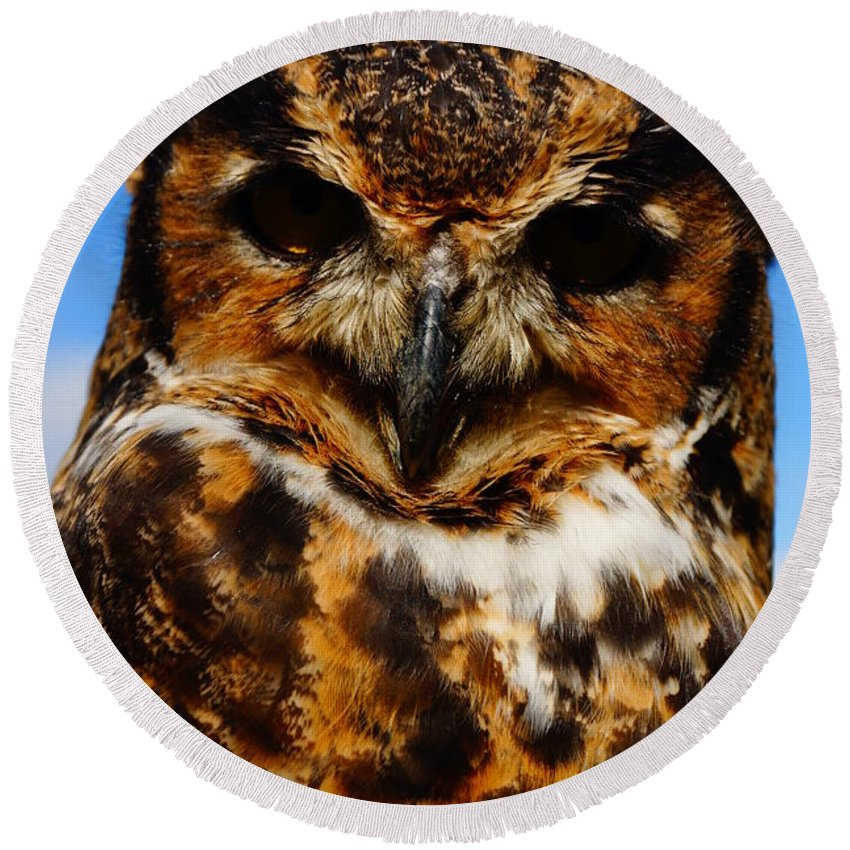 Owls Round Beach Towel featuring the photograph I Know What Your Thinking by Jeffery L Bowers