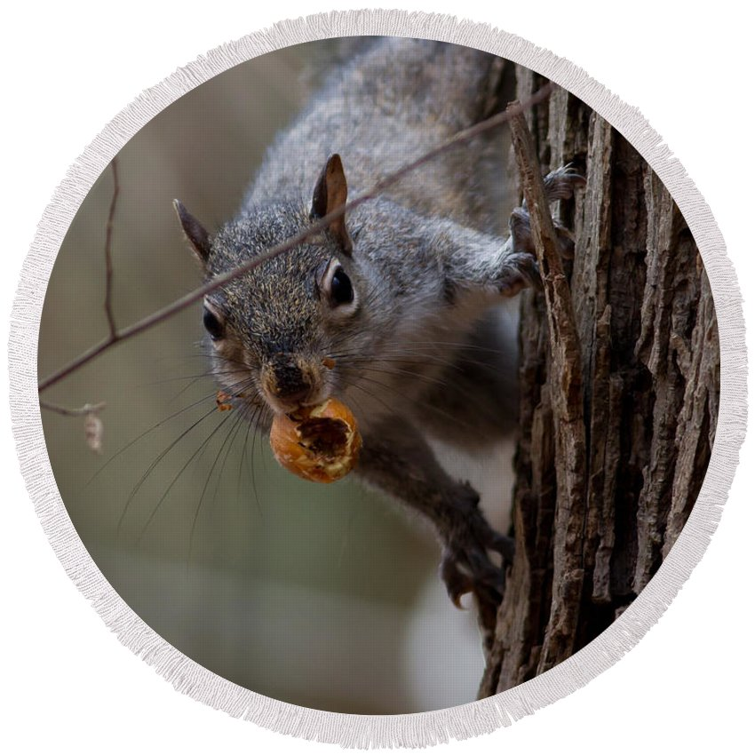 Squirrel Round Beach Towel featuring the photograph I See You by Douglas Stucky