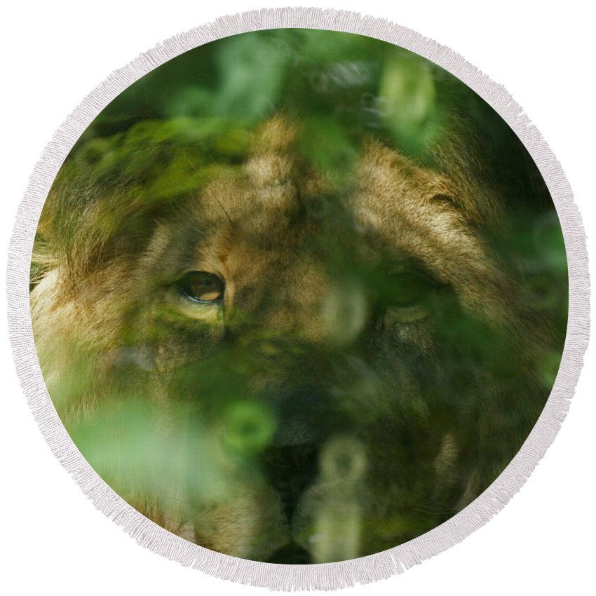 Animals Round Beach Towel featuring the photograph I See You by Ernie Echols