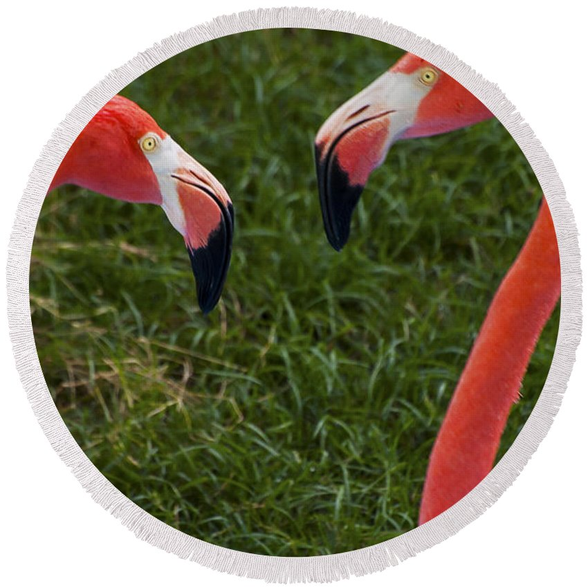 Flamingo Flamingos Bird Birds Animal Animals Creature Creatures Louisiana Purchase Gardens And Zoo Monroe Nature Round Beach Towel featuring the photograph I Think I'm In Love by Bob Phillips