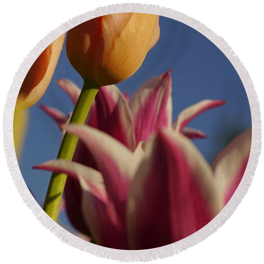 Flowers Round Beach Towel featuring the photograph I Win by Jeffery L Bowers