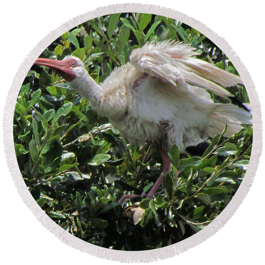 Ibis Round Beach Towel featuring the photograph Ibis 12 by J M Farris Photography