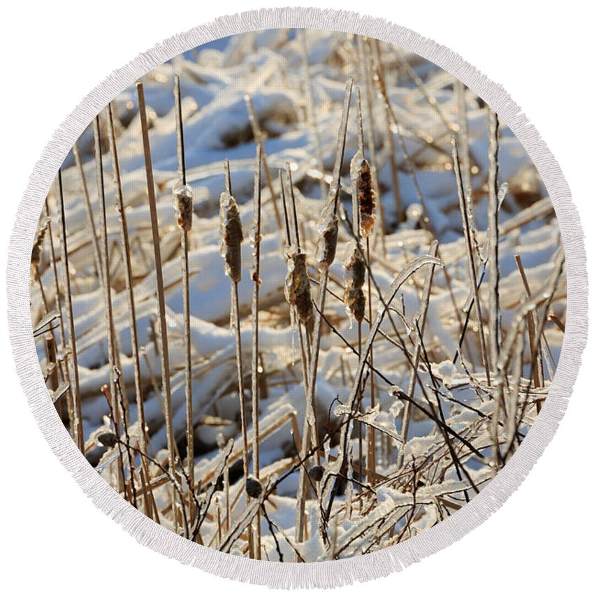 Ice Round Beach Towel featuring the photograph Ice Coated Bullrushes by Louise Heusinkveld